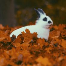 Immunsystem im Herbst - eine Herausforderung